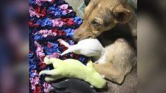 """Nace extraño cachorro con pelo verde en Filipinas y sus dueños lo llaman """"Wasabi"""""""
