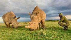Los dos últimos rinocerontes blancos del norte en el mundo necesitan guardias armados las 24 horas