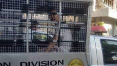 Beijing profundiza su influencia en Asia sudoriental capacitando a los policías de la región
