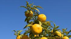 Beneficios del aceite esencial de naranja amarga para la ansiedad y el sueño