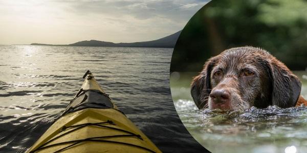 Padre e hijo realizan heroico rescate de perrito lanzado al río en medio de una tormenta en Argentina