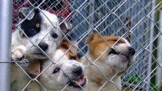 San Antonio prohíbe a tiendas de mascotas vender perros y gatos de criaderos comerciales
