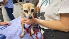 Encuentran perro de una familia de Texas desaparecido por 6 años gracias a un microchip