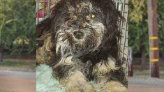 Rescatan a perro callejero que se negaba a abandonar a su amigo muerto hasta que rescatistas idean plan