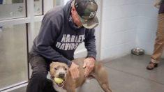Conmovedor reencuentro de un hombre y su perro que se había perdido por casi 6 meses