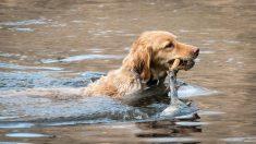 """Intrépido rescatista mexicano salva perritos en medio de inundaciones: """"No le tiene miedo a nada"""""""
