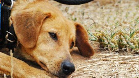 Perrito pasa 3 meses junto a la tumba de su dueño y se niega a abandonarla a pesar de un tifón