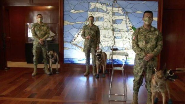 Perros rescatados por la Marina de México en inundaciones ya tienen nombre gracias a los internautas