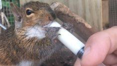 Ardilla bebé se desmaya frente a él y cambia su vida para volverse todo un rescatista de roedores