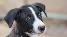 Perrito que nació con las patas torcidas aprende a caminar en dos patas superando sus limitaciones