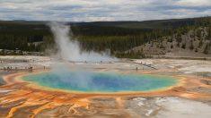 Arrestan a 3 hombres por tratar de cocinar 2 pollos en fuente termal del Parque Nacional Yellowstone