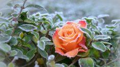 Las plantas revelan que las dificultades no siempre son malas