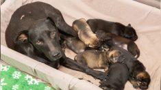 Rescatan perrita y siete cachorros del lugar donde se planeaba realizar una demolición en Phoenix