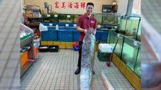 Capturan enorme pez remo de 16 pies después de los temblores en la costa de Taiwán