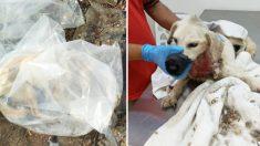 Conductor ve a 3 hombres arrojar a perro gravemente herido en una bolsa de plástico y acude en su ayuda