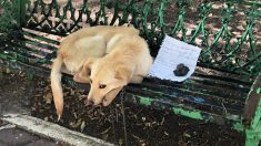 """Perro mexicano que sufre maltrato es abandonado con una nota desgarradora: """"Por favor, adóptenme"""""""