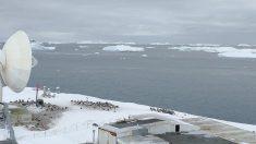 El virus del PCCh llega a la Antártida con un brote en una base militar de Chile