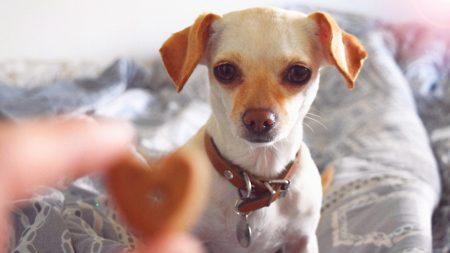 Refugio de animales celebra el Día de Acción de Gracias con todo y pavo para 80 perros
