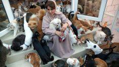 """Mujer vive con 480 gatos y 12 perros que rescató en una década: """"Fueron el salvavidas que me rescató"""""""