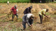El Salvador listo para enviar segundo contingente de trabajadores a EE.UU.