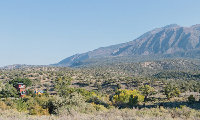 Los viñedos Sutcliffe se encuentran en el cañón McElmo, en el alto desierto del suroeste de Colorado. (Dennis Lennox)