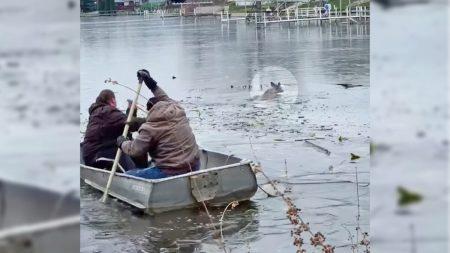 Un grupo de buenas personas rescata a una joven cierva de un lago helado con un bote de remos