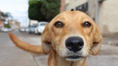Proponen ley en México para castigar con prisión a quien abandone a sus mascotas por la pandemia