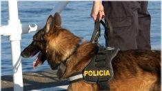 Amor a primera vista: perro policía hace amistad con dos delfines a orillas de un río