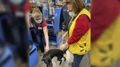 Perrita perdida por 3 semanas deambula por una tienda y encuentra a su dueña en el lugar de trabajo
