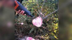 """Mujer fallecida envía """"señal"""" a esposo vivo con un tronco de árbol de Navidad en forma de corazón"""