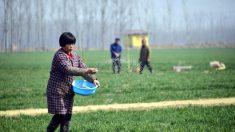 Lo que se esconde detrás de la crisis alimentaria de China