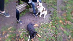 Cachorro ciego que vagaba sin rumbo por Hyde Park en Londres encuentra un nuevo hogar