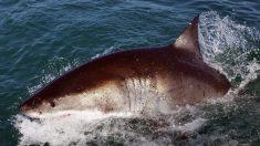 Muere una mujer por un inusual ataque de tiburón en el norte de Nueva Zelanda