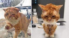 Gato callejero afectado por el invierno golpea la puerta de una mujer y recibe una segunda oportunidad