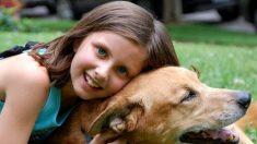 Pregunte al veterinario: para prevenir las mordeduras, enseñe a los niños a respetar a los perros