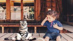 Pregunte al veterinario: adoptar gatos con 'necesidades especiales' puede ser gratificante