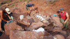 Paleontólogos descubren fósiles de dinosaurios que podrían ser de la criatura más grande jamás conocida