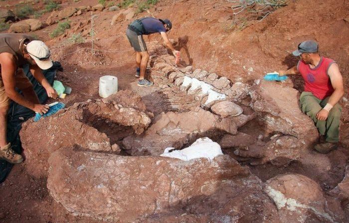 Los paleontólogos descubrieron los restos fosilizados de un titanosaurio de 98 millones de años en la provincia de Neuquén en el noroeste de la Patagonia, Argentina. (Cortesía de Alejandro Otero y José Luis Carballido)