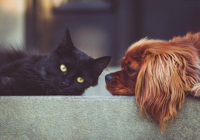 Hay muchas formas de ahorrar en el cuidado de las mascotas mientras se asegura de que estén bien cuidadas. (StockSnap/Pixabay).
