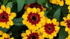 Tres nuevas flores galardonadas para su jardín