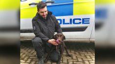 Cachorro enérgico con 2 intentos fallidos de adopción encuentra su vocación en la fuerza policial