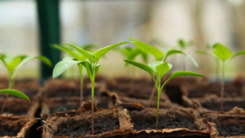 Plantar un jardín es divertido y gratificante. (J_Garget/Pixabay)