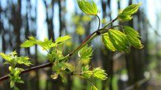La naturaleza tiene propiedades curativas para bosques australianos afectados por incendios forestales