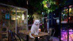Seúl detecta un gato con covid-19 al iniciar sistema pionero de test a mascotas