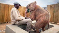 Rescatan a una bebé elefante albina atascada en una trampa a punto de morir
