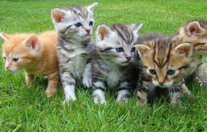 Joven veterinaria mexicana rescata gatitos recién nacidos abandonados y les da una segunda oportunidad