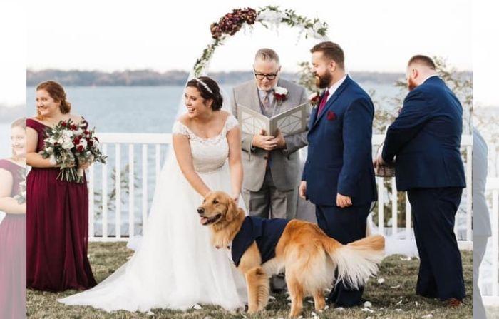 Perro vestido de esmoquin es encargado de llevar los anillos el día de la boda de sus dueños