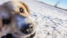 Pareja halla a perrita congelándose en una montaña, la cargan 6 millas y logran que regrese a casa