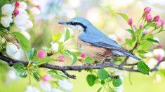 Febrero es para las aves