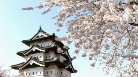 Flores de cerezo japonesas: la gloriosa celebración fugaz de la primavera